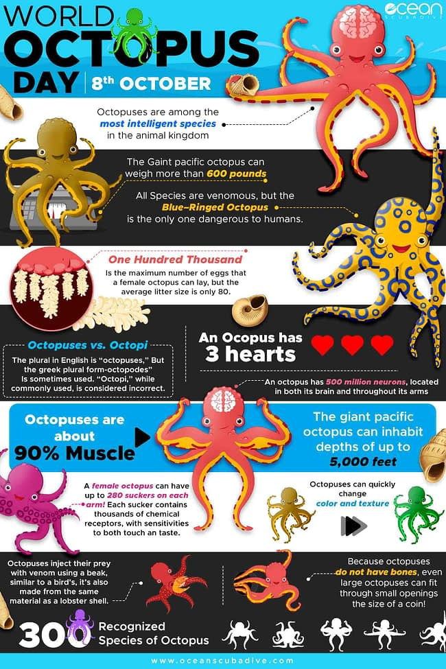 Octopus Infographic