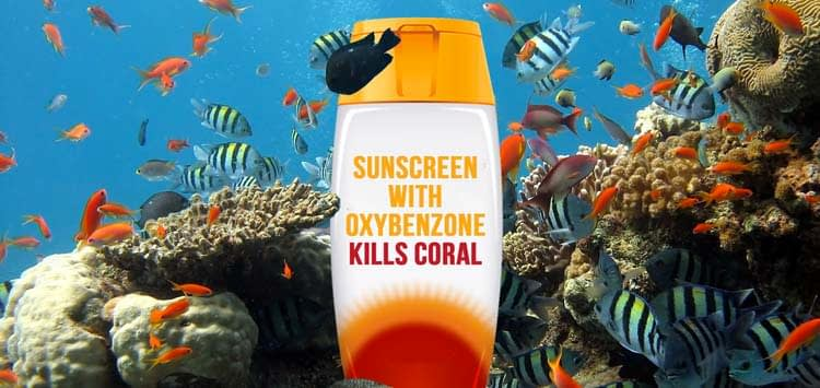 The Impact Sunscreen Has on Coral Reefs