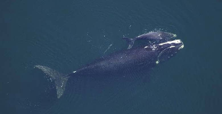 Happy World Whale Day