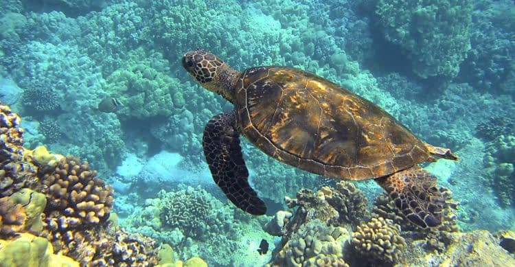 How Long Has World Turtle Day Been Celebrated?
