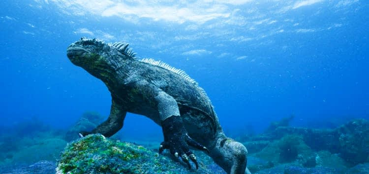 Los Galapagos Best Dive Destinations for Underwater Photography