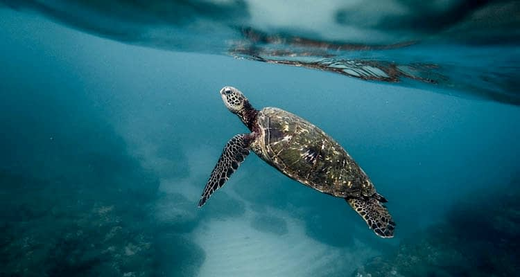 Fascinating Turtle Facts