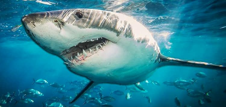 Controversy about Shark Week