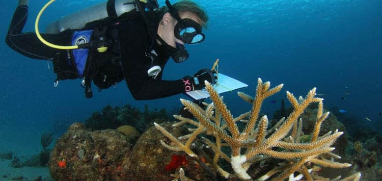 Preventative Measures and How You Can Help Stop Coral Bleaching