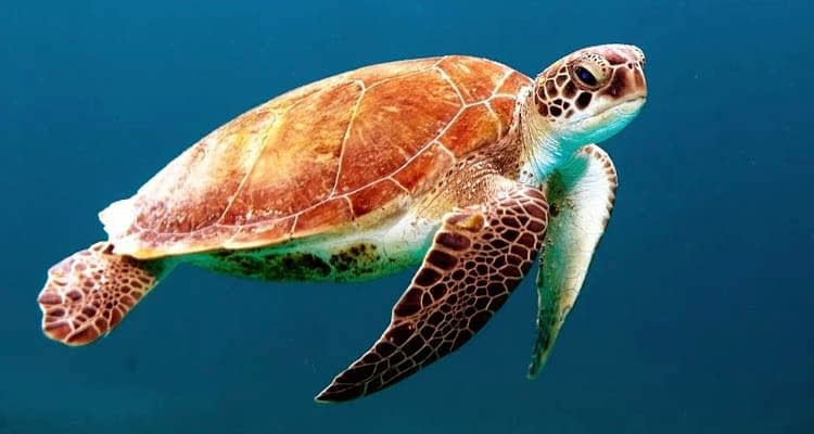 Fascinating Facts about Turtles