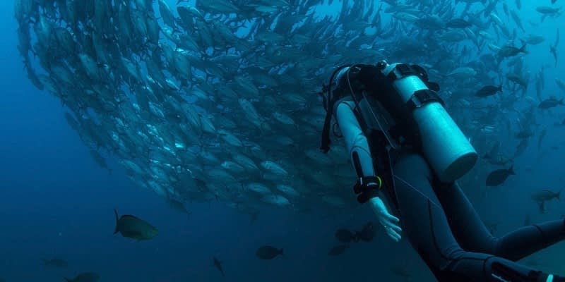 Is Scuba Diving a Career