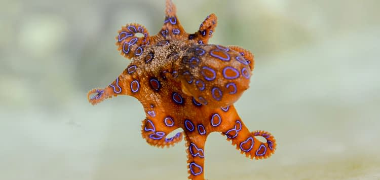 How Many Octopuses Are There