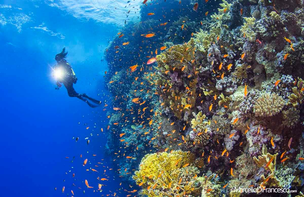 Big Brother Islands, Egyptian Red Sea