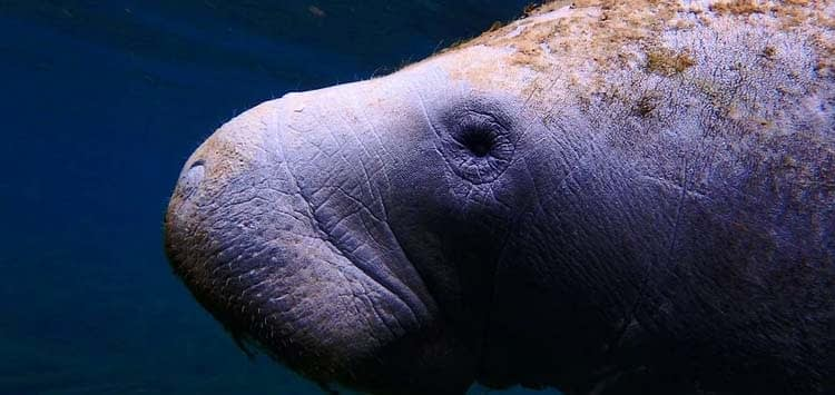 When is Manatee Awareness Month
