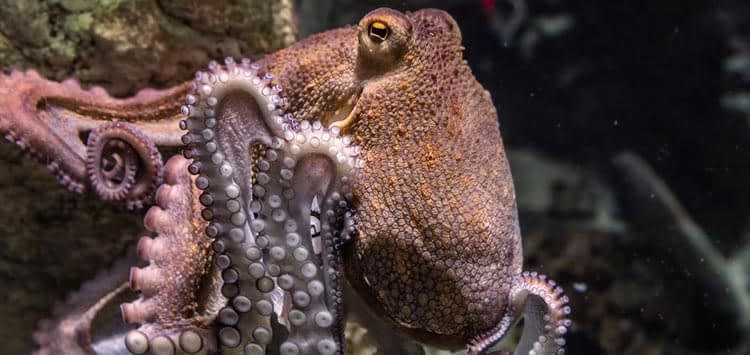 World Cephalopod Awareness Days