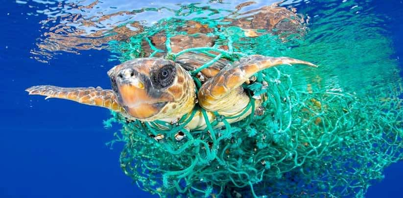 Support Organisations Working to Save our Oceans