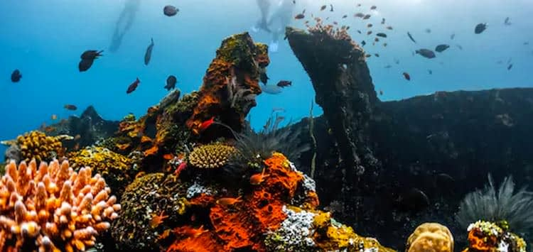 Coral Covered USS Liberty Shipwreck