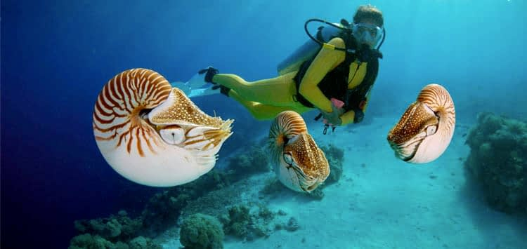 When is the Best Time to Dive Palau
