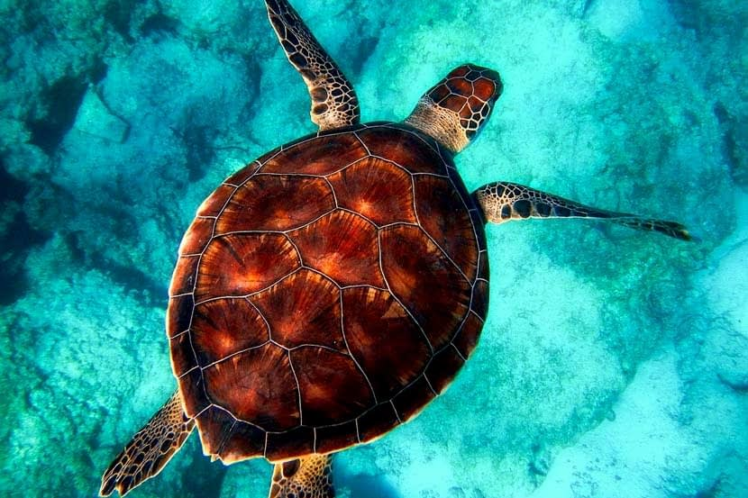 Facts about Turtles you Didn't know