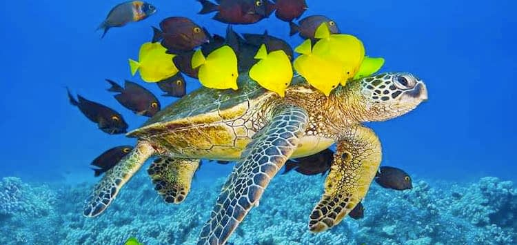 Marine Life Can I See in The Egyptian Red Sea
