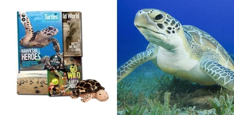Adopt a Sea Turtle Best Gift