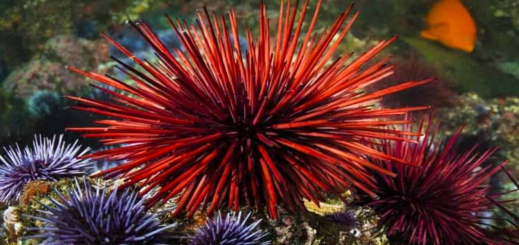 How to Treat Sea Urchin Injuries