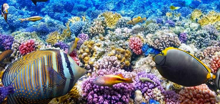 Is Sunscreen Harmful to Corals & Marine Life?