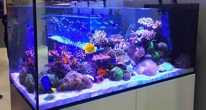 Different Color Temperatures for LED Aquarium Lighting