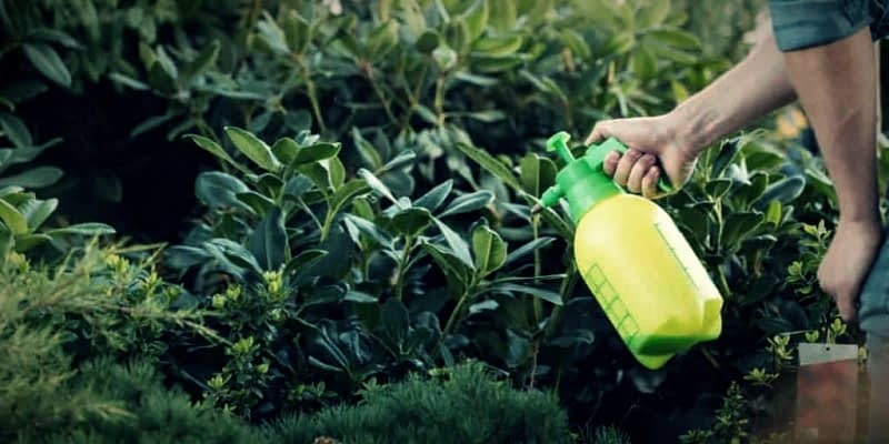Use-a-Homemade-Natural-Insect-Repellent