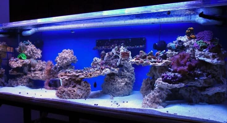 Best Lighting for Fish Tank Lights