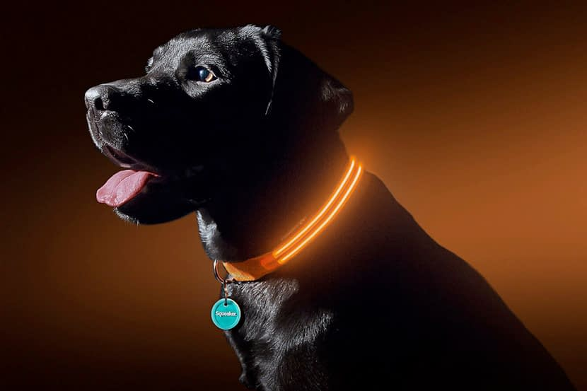 Best LED Dog Collars