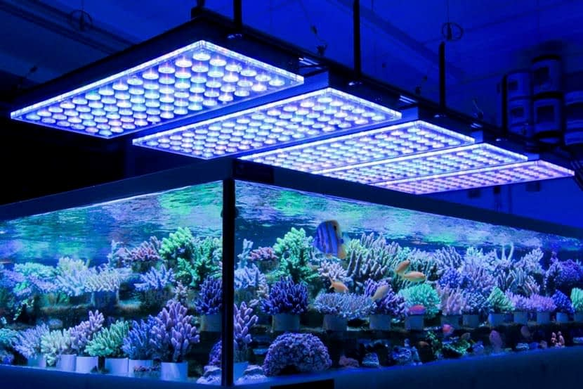 Best LED Aquarium Lighting